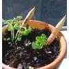 Grin Matita Sprout