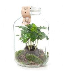 GROWING CONCEPT VASO CON COFFEA