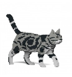 JEKCA AMERICAN SHORTHAIR CAT